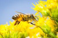 Beekeeper Club @ Lackawanna College ENvironmental Education Center | Moscow | Pennsylvania | United States