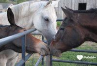 Nurture & Nourish: Horse Huggin' @ Indraloka Animal Sanctuary | Mehoopany | Pennsylvania | United States